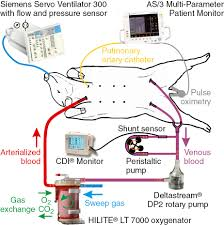 physiological closed loop control of mechanical ventilation and