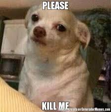 Kill Me Meme - please kill me meme de perro chihuahua enojado memes generadormemes