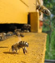 spring management keeping backyard bees