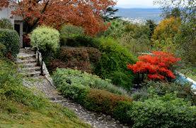 best 25 california native landscape growing plants on a hillside best plants for slopes and banks