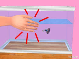 how to play the fish table 24 best betta fish breeding and care images on pinterest fish
