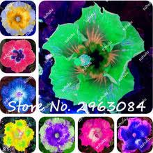 Cheap Flower Seeds - online get cheap indoor hibiscus plant aliexpress com alibaba group