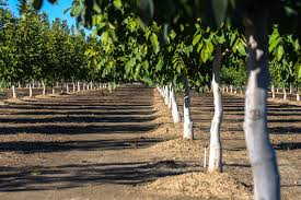 where to pick apples in julian california