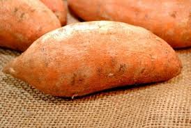 A Root Vegetable - stocking the root cellar how to store vegetables over the winter