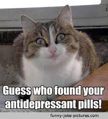funny antidepressant pill cat meme meme cat and pictures images