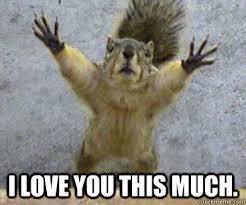 I Love You This Much Meme - i love you this much desperate squirrel quickmeme