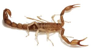 the meaning of the in which you saw scorpion