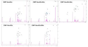 utilizing cmp sialic acid analogs to unravel neisseria gonorrhoeae
