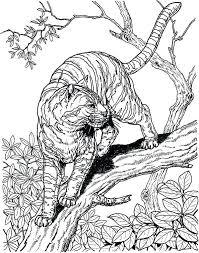 snow tiger coloring page snow leopard coloring pages snow leopard coloring pages luxury big