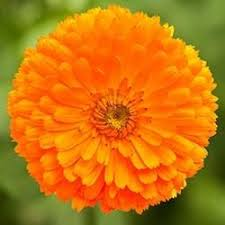 Flowers Information - 43 best indian flowers images on pinterest indian flowers types