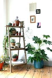 decorative indoor plants decorative planter pots fashionable indoor decorative plants indoor