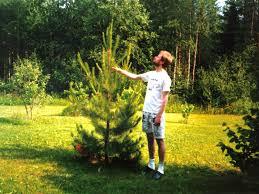 aalto s photo album my tree