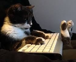 Working Cat Meme - takeyourcattoworkday working at home with pets pinterest