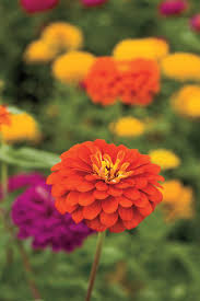 Plants That Don T Need Water Drought Tolerant Plants Southern Living