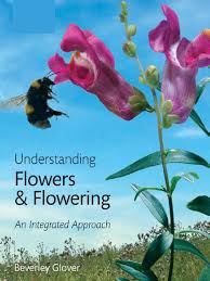 flowers and flowering flowers pollination