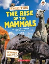 mammals for ks1 and ks2 mammals homework help mammals for kids