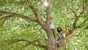 how to sell walnut trees in kentucky garden guides