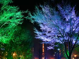 Outdoor Up Lighting For Trees Atlanta Landscape Architecture
