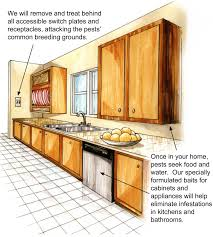 alamo pest control pests and termites