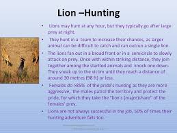 all about lions 30 interesting facts for ppt