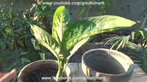 pin by izhar ahmad on how to grow plants at home pinterest