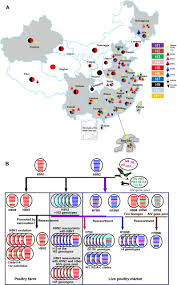 Nih Map Fig 1 Emergence And Distribution Of Avian Influenza Viruses In