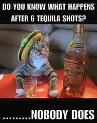 Funny Tequila Memes - tequila cat always cracks me up tequila meme funny haha humor