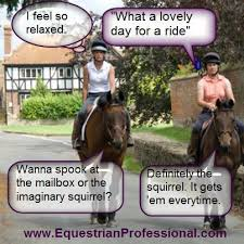 Horse Riding Meme - 127 best horse funnies images on pinterest equestrian quotes