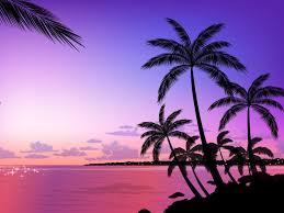 palm tree wallpaper home ideas