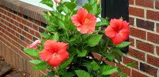 flower containers for beginners today u0027s homeowner