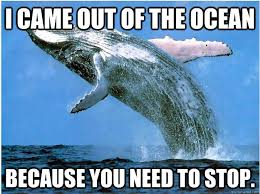 You Need To Stop Meme - i came out of the ocean because you need to stop i came out of