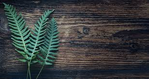 Free Picture Leaf Nature Fern Fern Plant Nature Free Photo On Pixabay