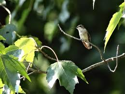how to attract hummingbirds to your garden the soulful gardener