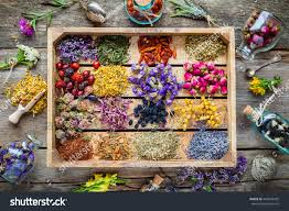 On Table by Healing Herbs Wooden Box On Table Stock Photo 443045425 Shutterstock