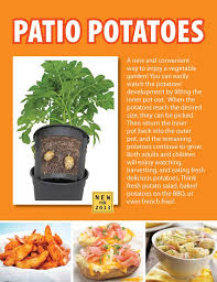 Container Gardening Potatoes - 29 best grow potatoes images on pinterest grow potatoes