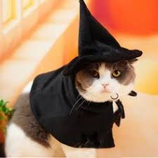 Halloween Costumes Cats Spider Cat Costume Cute Animals Halloween Costume Ideas Pet