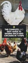 Chickens In The Backyard by The Complete 7 Step Guide To Raising Chickens In Your Backyard