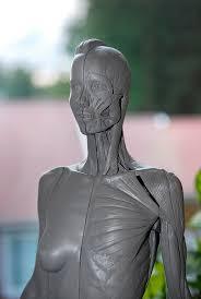 Female Anatomy Figure Anatomy Cg Tennet