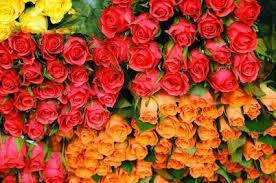 wholesale roses bulk roses bulk flowers roses pink roses white roses