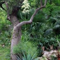 desert landscaping plants drought tolerant plants high country