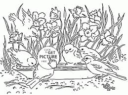 daffodils and little birds coloring page for kids seasons