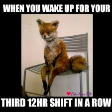 Stoned Fox Meme - pretty stoned fox meme 8 holidays for nurses that we wish were