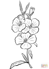 godetia rubicunda u0027farewell to spring u0027 coloring page free