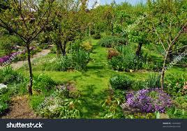 apple trees for small gardens cori u0026matt garden