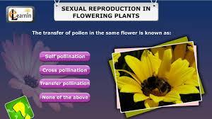 short interactive quiz sexual reproduction in flowering plants