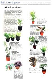 indoor plants singapore article on straits times life on houseplant tips gardening with