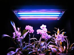 T5 Lamps Home Depot by Fluorescent Lights Beautiful Fluorescent Grow Light 125 Grow