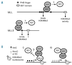 mll5 expression as a biomarker for dna hypermethylation and