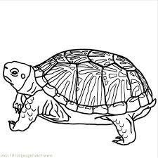 kidscolouringpages orgprint u0026 download turtles coloring pages