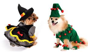 Halloween Costumes Pomeranians Adorable Halloween Costumes Dog Doggie Couture Shop